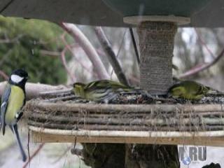 Веб-камера кормушки для птиц