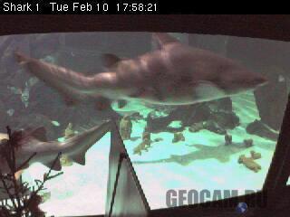 Веб-камера в аквариуме с акулами