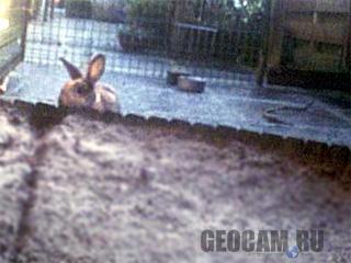 Rabbit Webcam 3