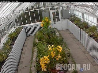 Веб-камера в оранжерее