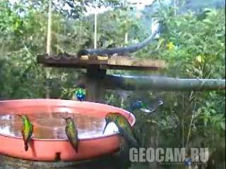 Веб-камера у поилки для колибри