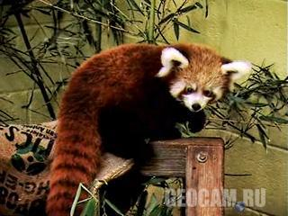 Веб-камера Firefox