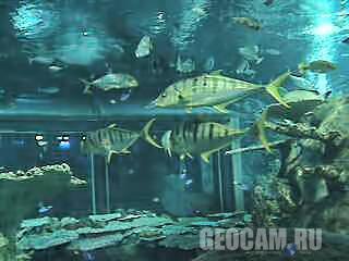 Веб-камера аквариума Toba Aquarium