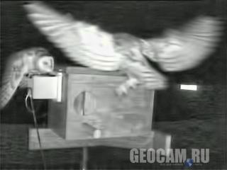 Вид на совиное гнездо