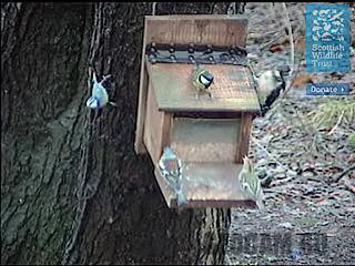 Веб-камера у кормушки для птиц
