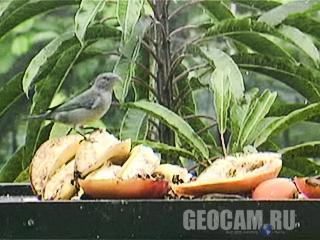 Веб-камера в Атлантичному тропічному лісі