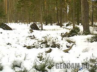 Веб-камера в лесу Алутагузе