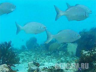 Cayman Islands Reef Webcam