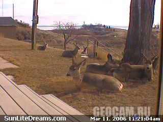 Fort Peck Lake from Sunlite Dreams Cam