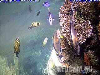 Веб-камера в морском аквариуме.