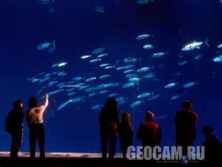 Веб-камера 2 в дальнем аквариуме Monterey Bay