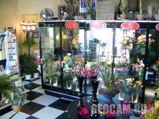 Веб-камера в магазине цветов