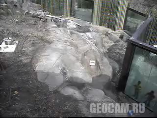 Веб-камера 1B в вольере с медведями-губачами