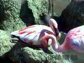Веб-камера на острове фламинго
