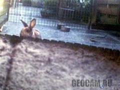 Rabbit Webcam 3