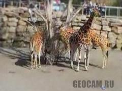 Dublin Zoo webcam