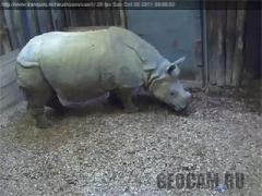 Веб-камера 1 в вольере у носорога (Нидерланды)