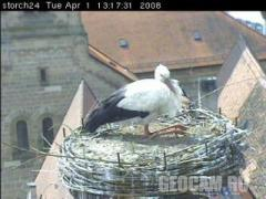 Stork nest webcam (Germany)
