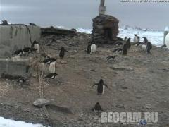 Penguin Webcam 1, Antarctica