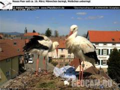 Гнездо аистов в Борнгейме