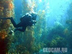 Live Kelp Cam (United States)