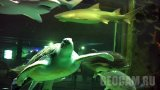 Ailand Oceanarium Underwater webcam: sharks and turtles