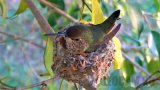 Alyssa's Hummingbird Webcam in Oceanside, California
