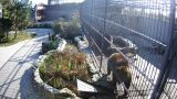 Webcam at the cage with bears (Vasilyevka, Ukraine)