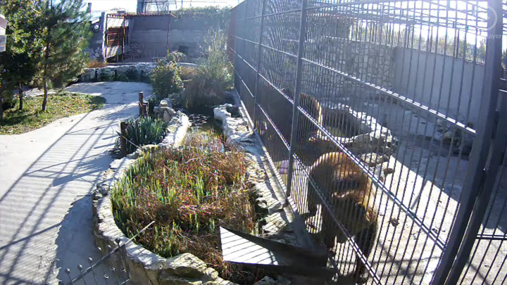 Webcam at the cage with bears: Webcam in the cage with bears