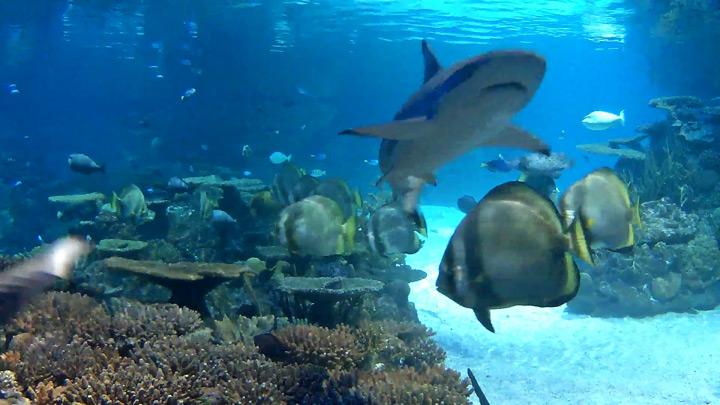 Веб-камера в аквариуме с рифовыми акулами