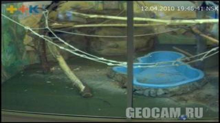 Colobus Webcam