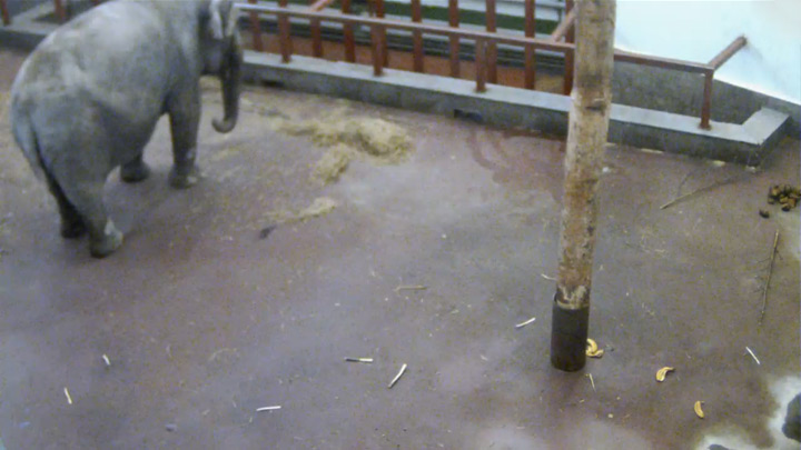 Elephant Dasha's webcam