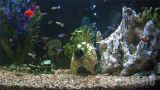 Live Fish Tank Aquarium Webcam