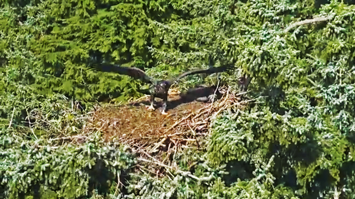 Webcam at the eagles nest at Glacier Gardens