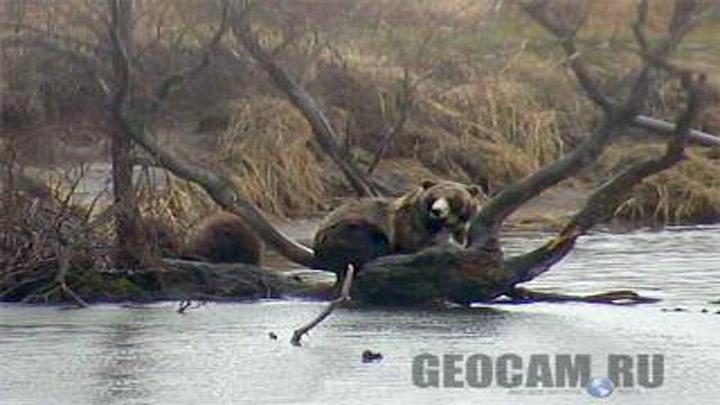 Веб-камера на Курильском озере