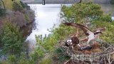 Osprey nest webcam on Laws lake, Scotland (Dunkeld, United Kingdom)