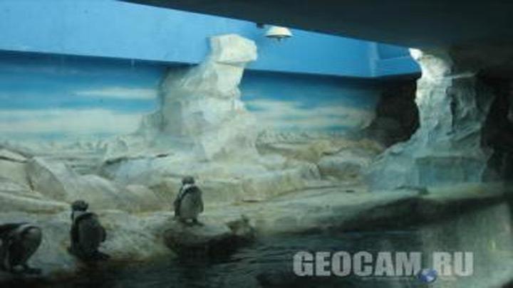 Веб-камера в Московском зоопарке
