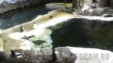 Kansas City Zoo Penguin Webcam