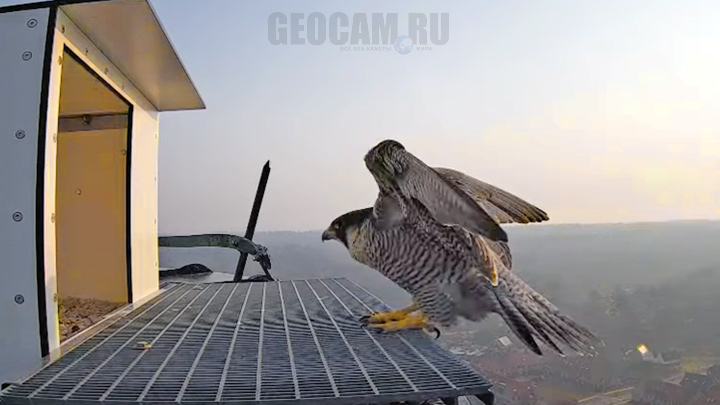 Webcam at the peregrine falcon birdhouse, Ede, Netherlands