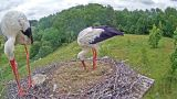 Webcam at storks' nest in Riga
