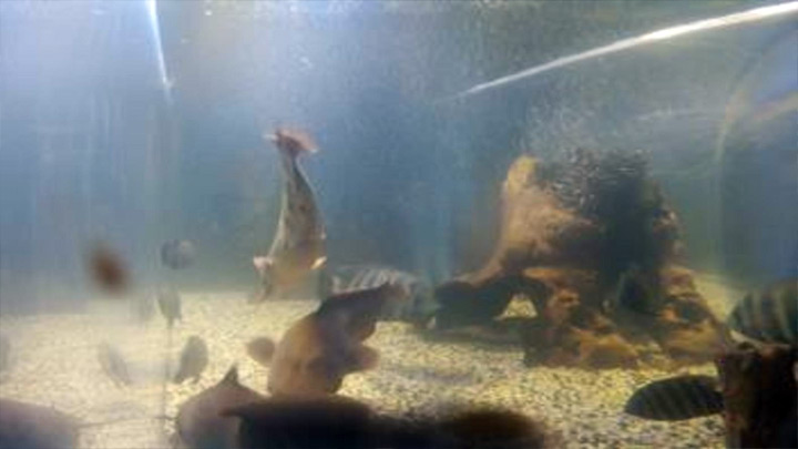 Aquarium webcam