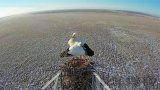 Webcam №2 near the nest of a Far Eastern stork, Tambovka