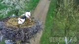 Webcam at the nest of white storks in the village of Tjaziv