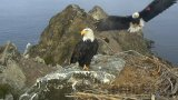 Webcam at the Bald Eagle's Nest, West End, Santa Catalina Island (Santa Catalina Island, United States)