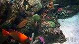 Wrasse and Anthias Cam (Long Beach, California, United States)