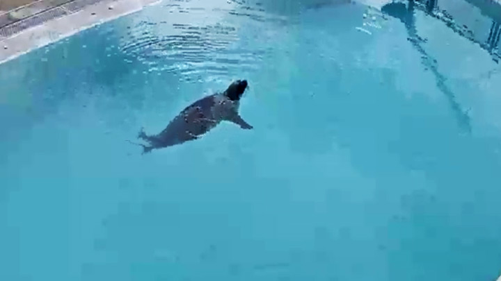 Webcam in the Seal Rehabilitation and Research Centre: Swimming pool with seals
